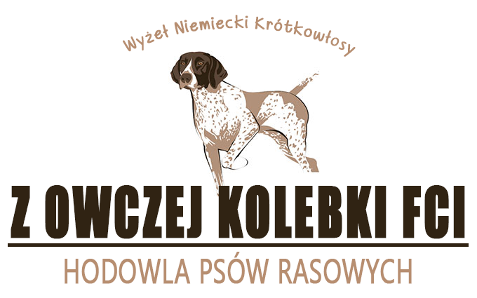 Z Owczej Kolebki - German Shorthaired Pointer - dog breeding